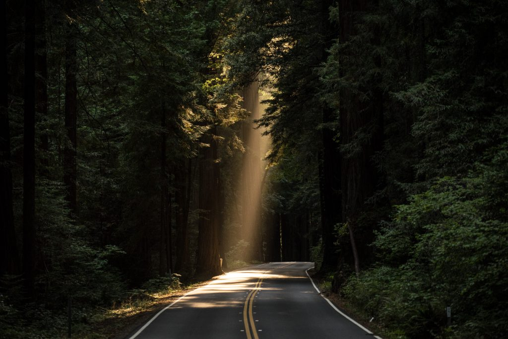 A wooded road with the sun peaking through up ahead.